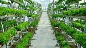 """""""Io condivido"""" coltiviamo agricoltura sociale"""